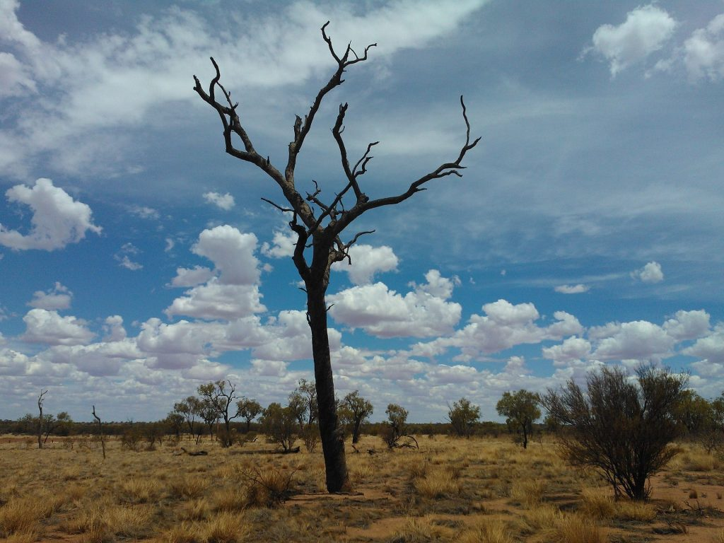 TOP 5 MUST-SEE IN NORTHERN TERRITORY AND SOUTH AUSTRALIA, AUSTRALIA